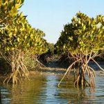 Harra forest_Qeshm island